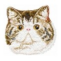 CHAT EXOTIC SHORTHAIR